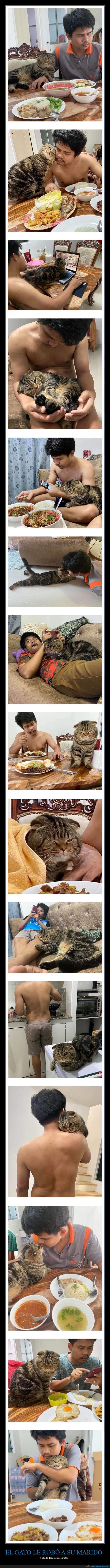 gato,marido,robar