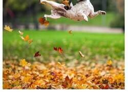 Enlace a Perros disfrutando del otoño