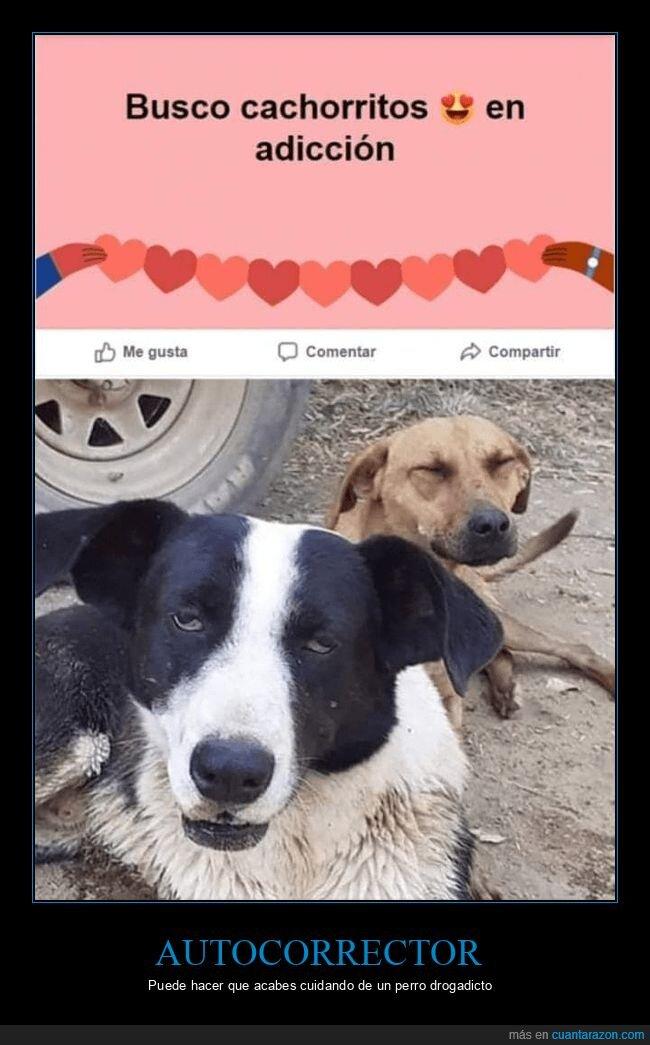 adicción,adopción,cachorros,fails,perros