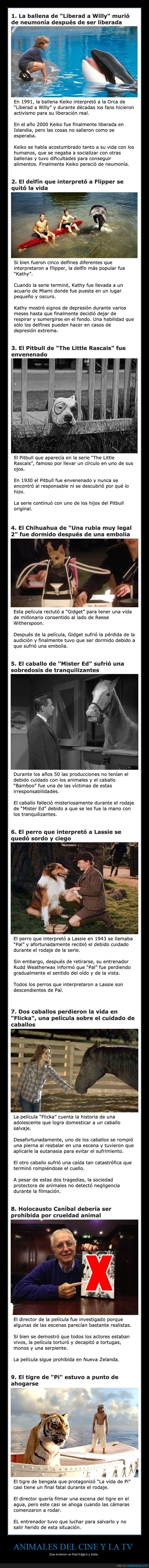animales,cine,final trágico