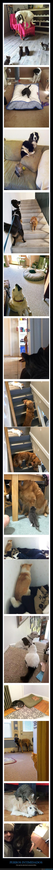 gatos,miedo,perros