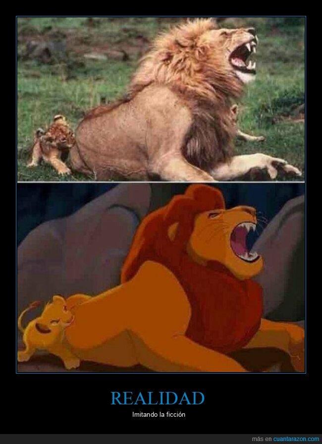 el rey león,leones,mordiendo,parecidos