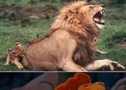 Enlace a El Rey León en la vida real