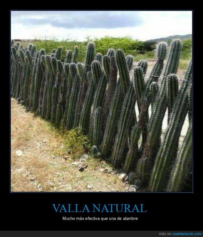 cactus,valla,wtf