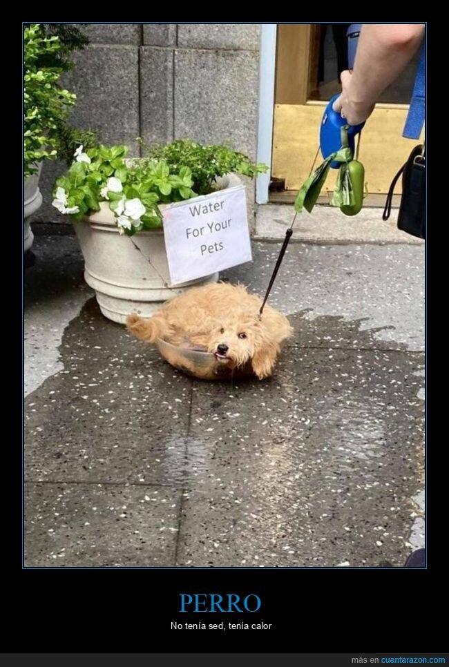 agua,fails,perro