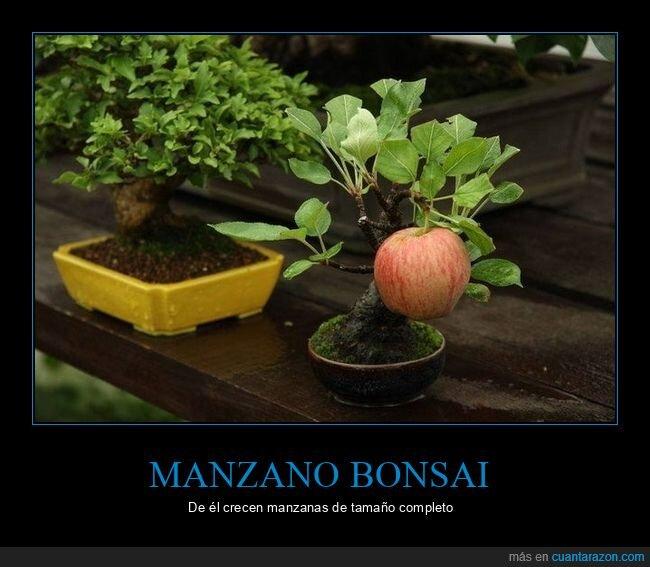 bonsai,manzanas,manzano,tamaño