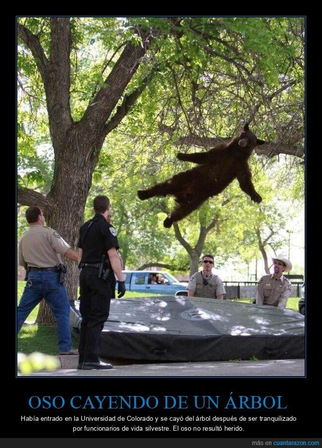 árbol,cayendo,oso,wtf