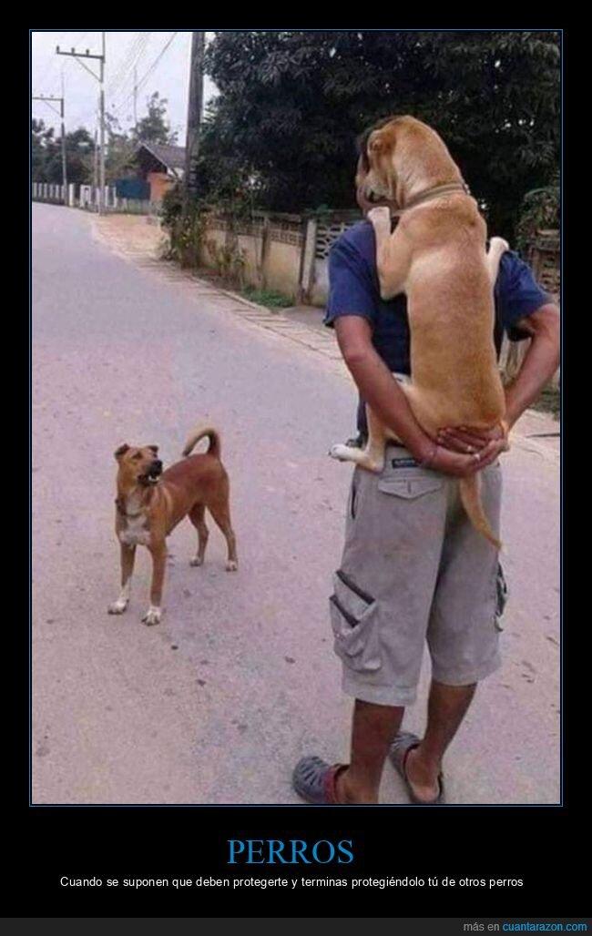 perro,proteger