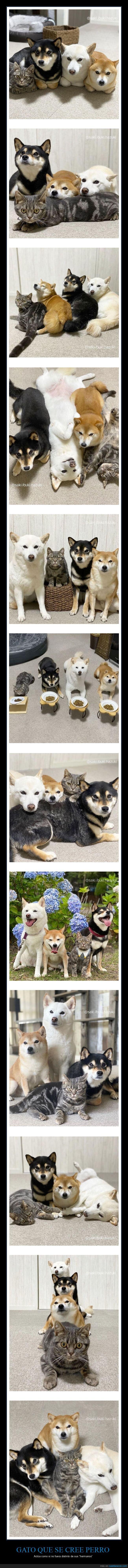 gato,perros