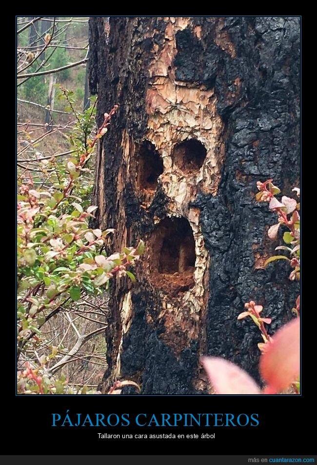 árbol,cara,pájaros carpinteros