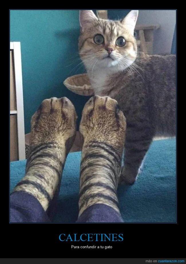 calcetines,gato,patas