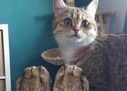 Enlace a Gato confuso