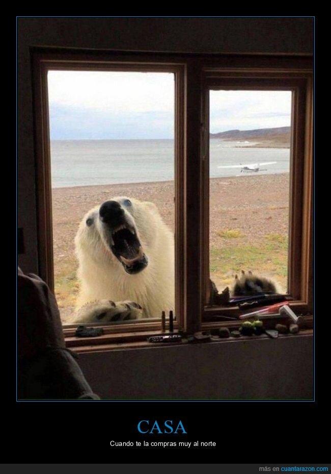 casa,oso polar,ventana,wtf
