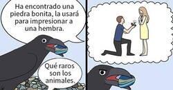 Enlace a Divertidos cómics sobre loros, ilustrados por la dueña de los pájaros