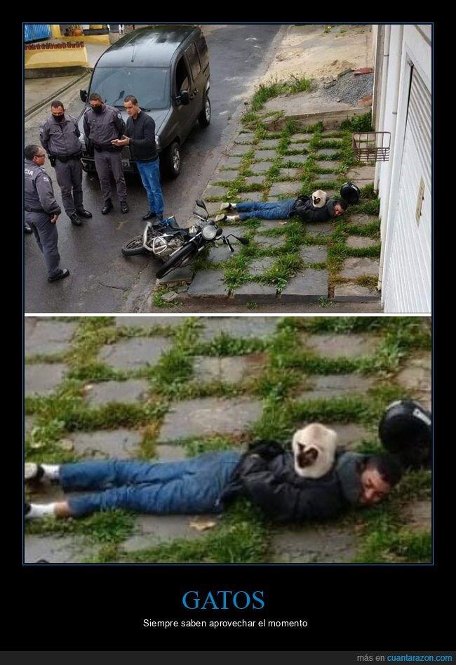 detenido,gatos,wtf