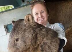 Enlace a Wombat monstruoso