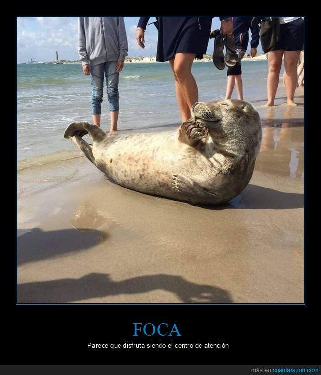 atención,foca,playa