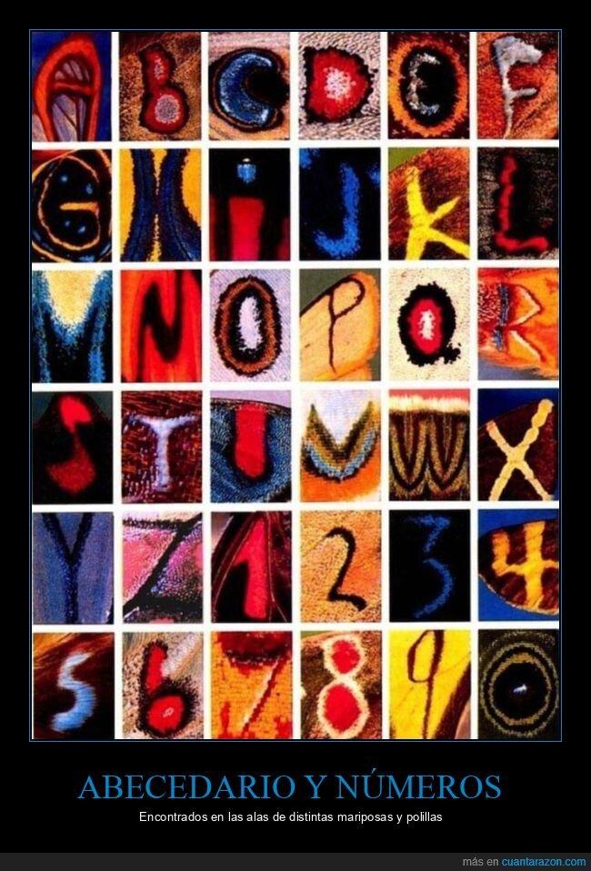 abecedario,alas,mariposas,números,polillas
