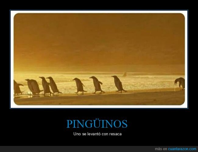pingüino,potando,resaca