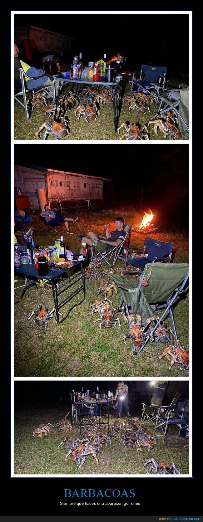 barbacoa,cangrejos de los cocoteros,wtf