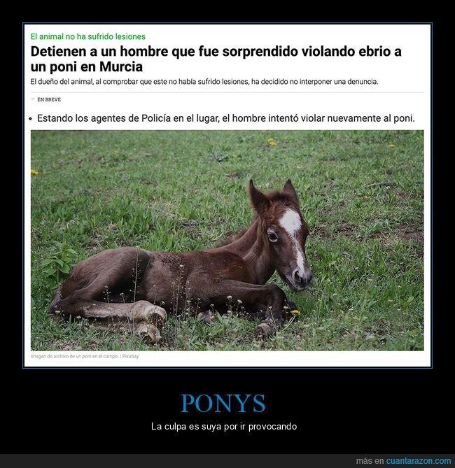pony,wtf