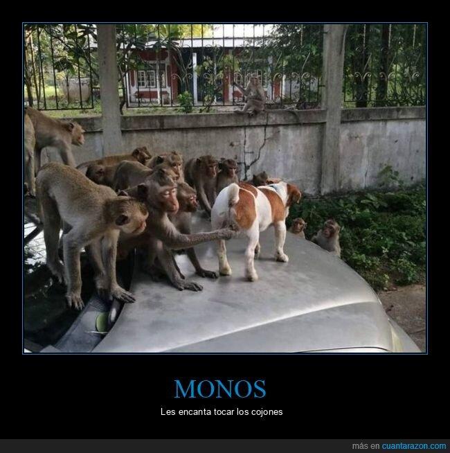 monos,perro,tocando