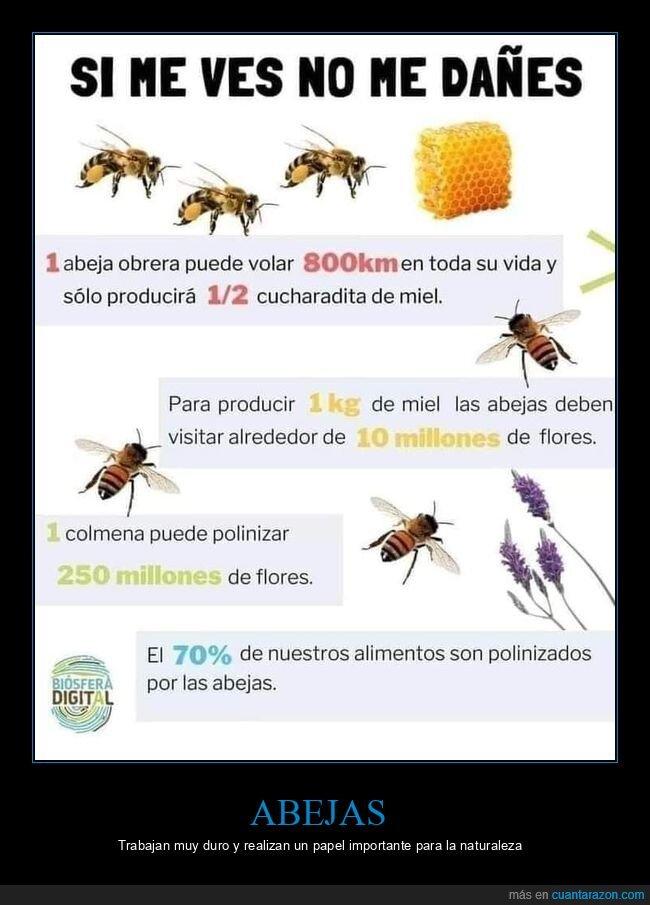 abejas,naturaleza,polinización
