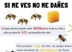 Enlace a Cuidemos a las abejas