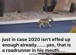 Enlace a Sí, eso es un coyote y sí, eso es un correcaminos