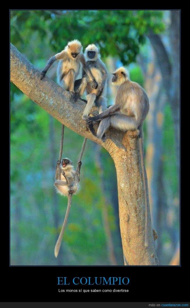 colas,columpio,monos