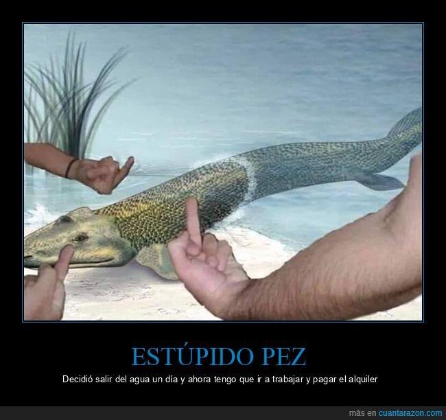 evolución,pez,trabajar
