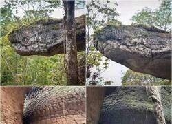 Enlace a Serpiente de roca
