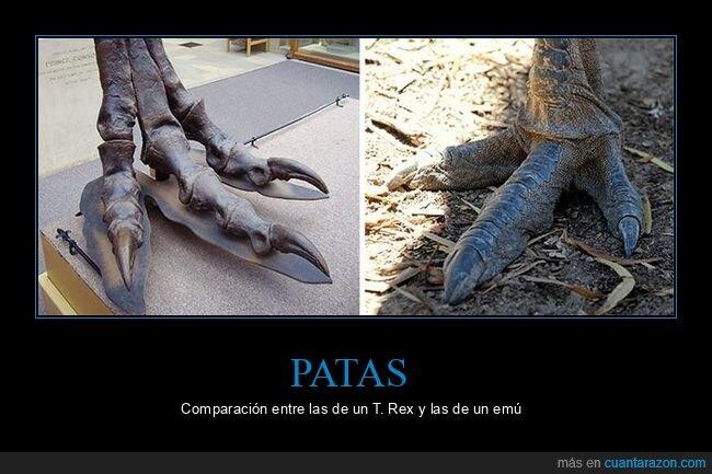 emú,patas,tiranosaurio