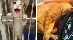 Enlace a Fotos muy reconfortantes de mascotas rescatadas en el mes de Septiembre