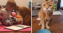 Enlace a Encantadoras fotos de gatos ancianos haciendo lo que mejor se les da
