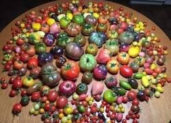 Enlace a Tomates para todos los gustos