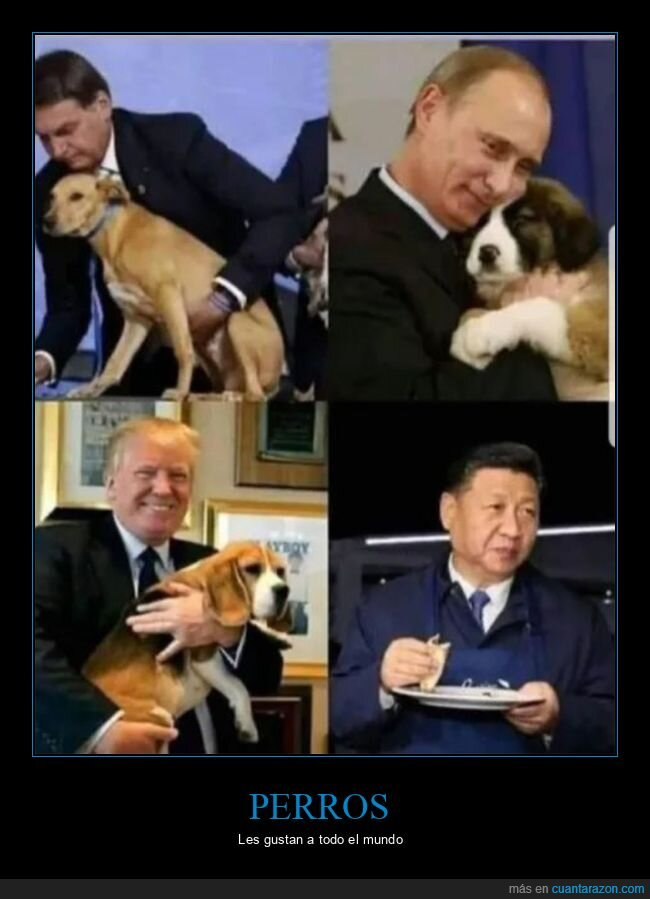 chinos,gustar,perros,políticos