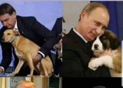Enlace a Todos adoran a los perros, cada uno a su manera...