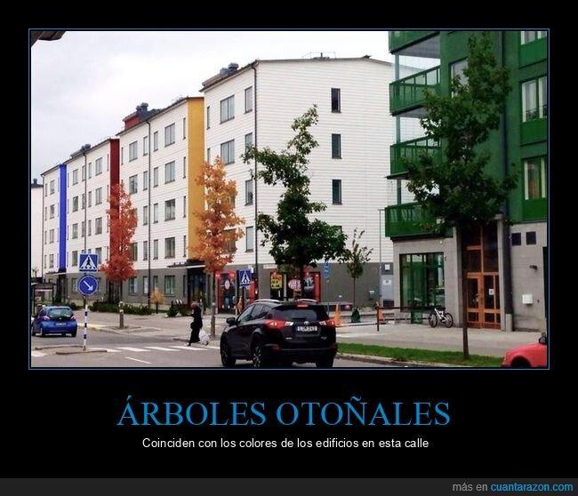 árboles,coincidir,colores,edificios