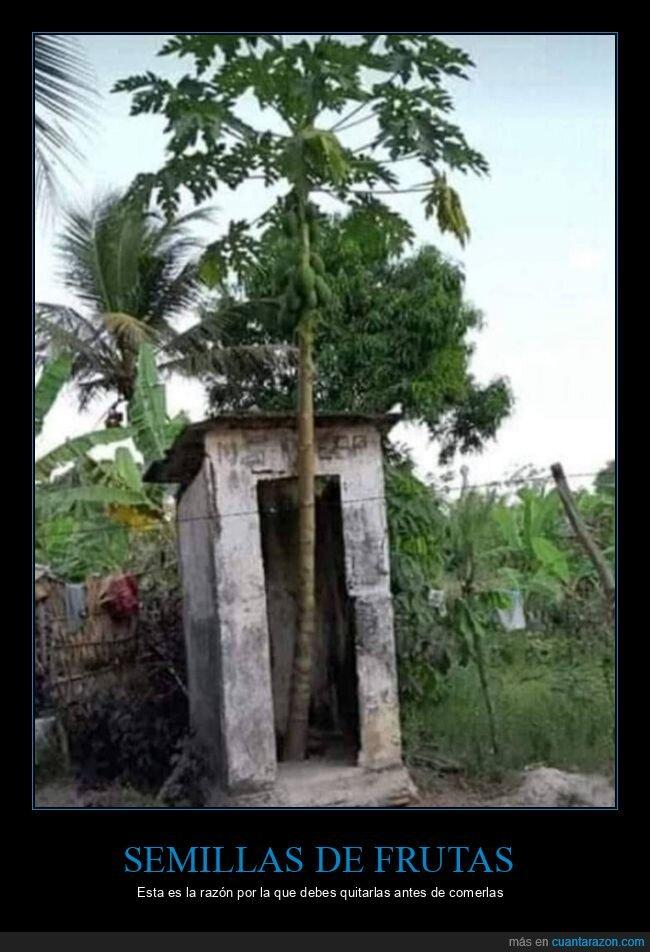 árbol,aseo,semillas