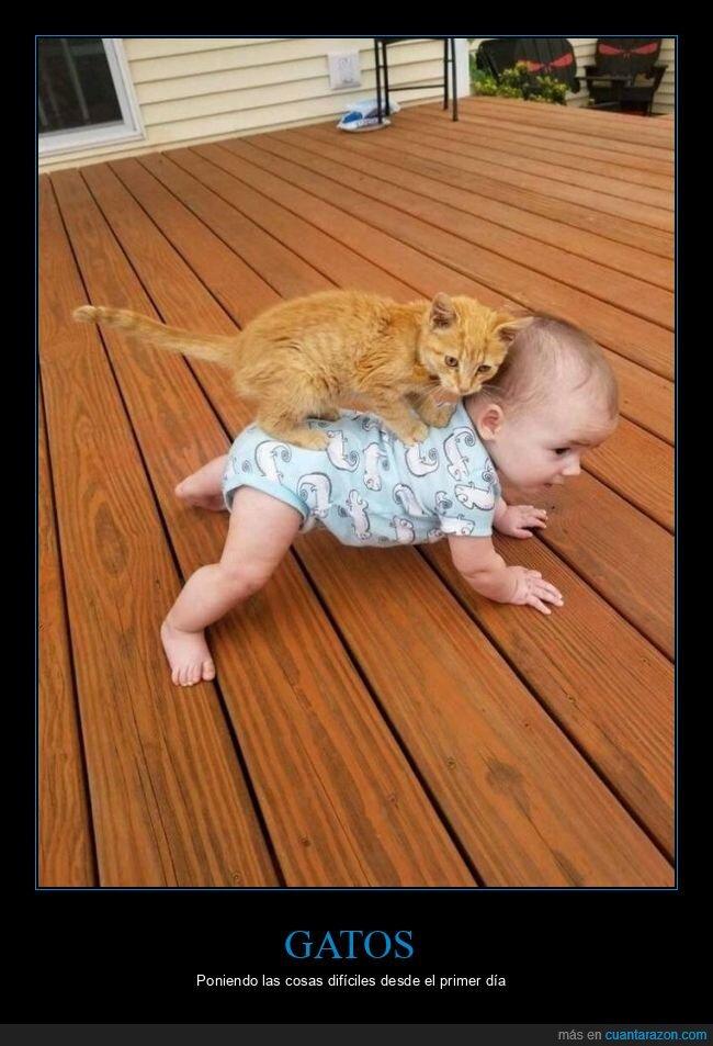 bebé,gato,wtf