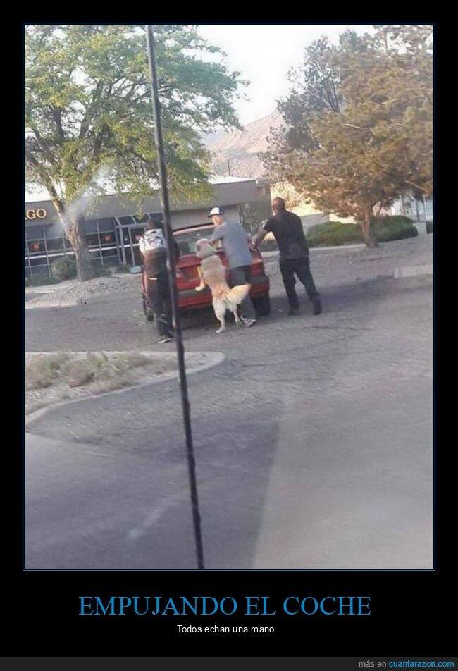 coche,empujando,perro,wtf