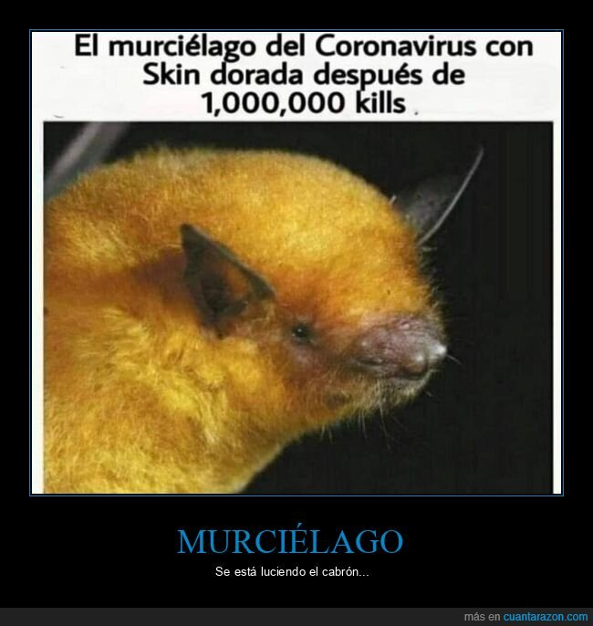 coronavirus,kills,muertes,murciélago,skin dorada