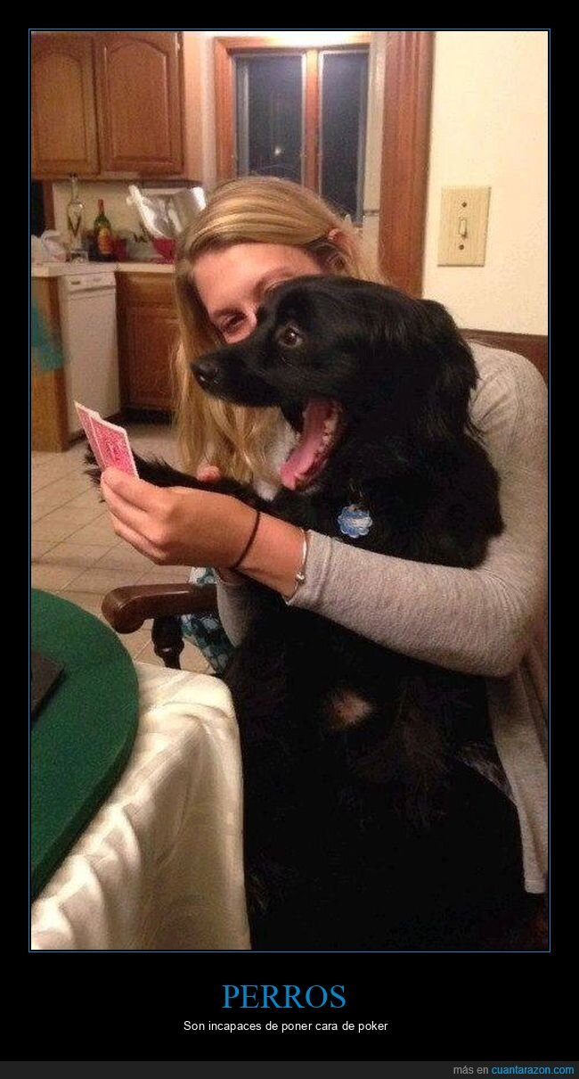cara,cartas,perro