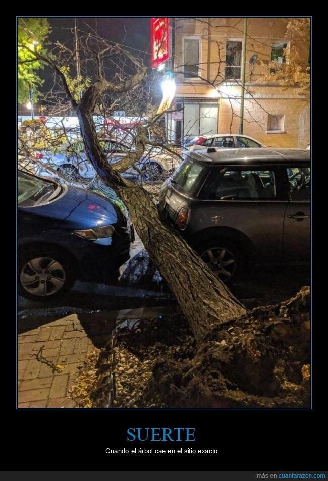 árbol,casi,coches
