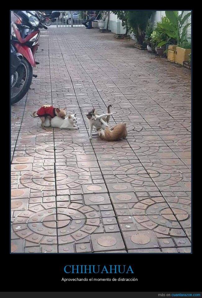 gatos,montando,perro,wtf