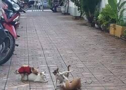 Enlace a Perro oportunista