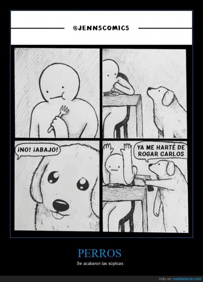 comiendo,perros,rogar