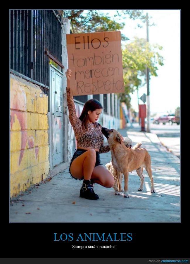 animales,respeto