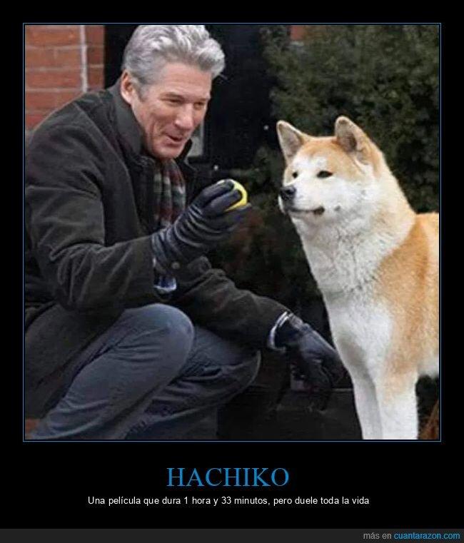 doler,hachiko,perros
